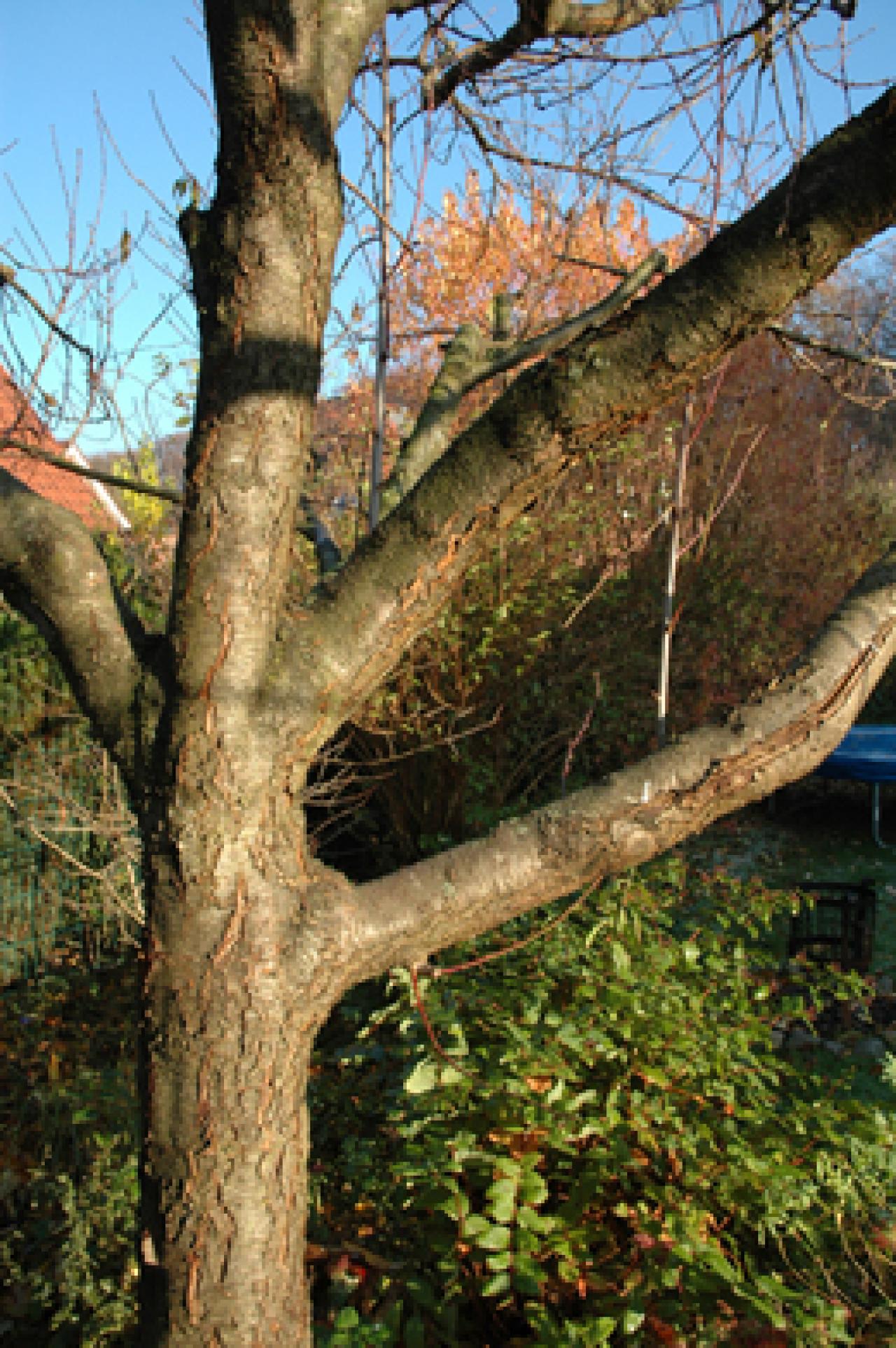 Pfirsichbaum krank garten frage und antwort wochenblatt f r landwirtschaft landleben - Pfirsichbaum im garten ...