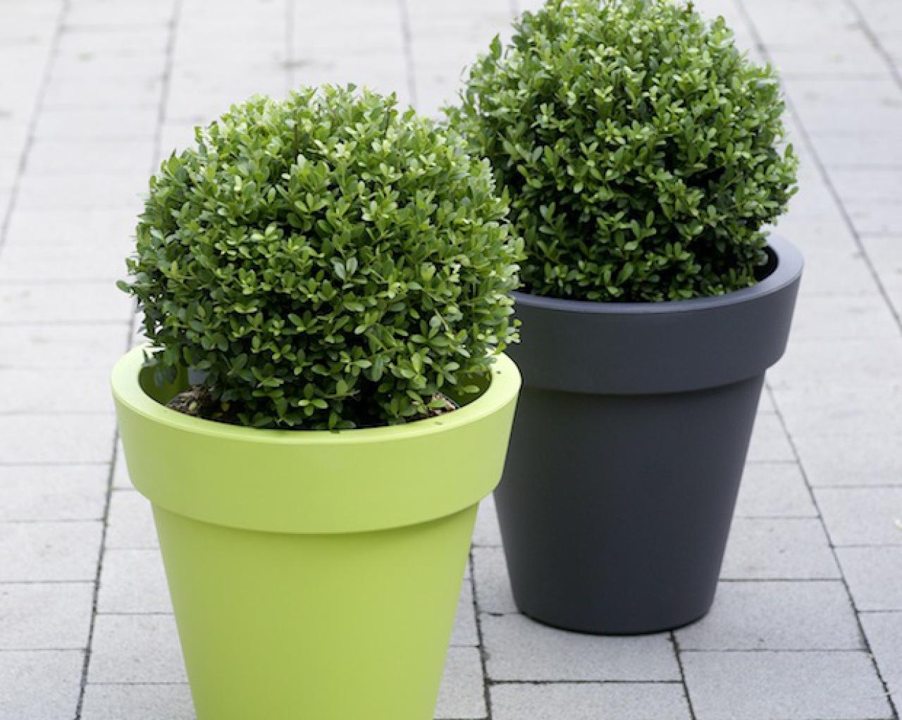 Gemeinsame Statt Buchsbaum: Gesunde Immergrüne - nachrichten - landleben #LR_97