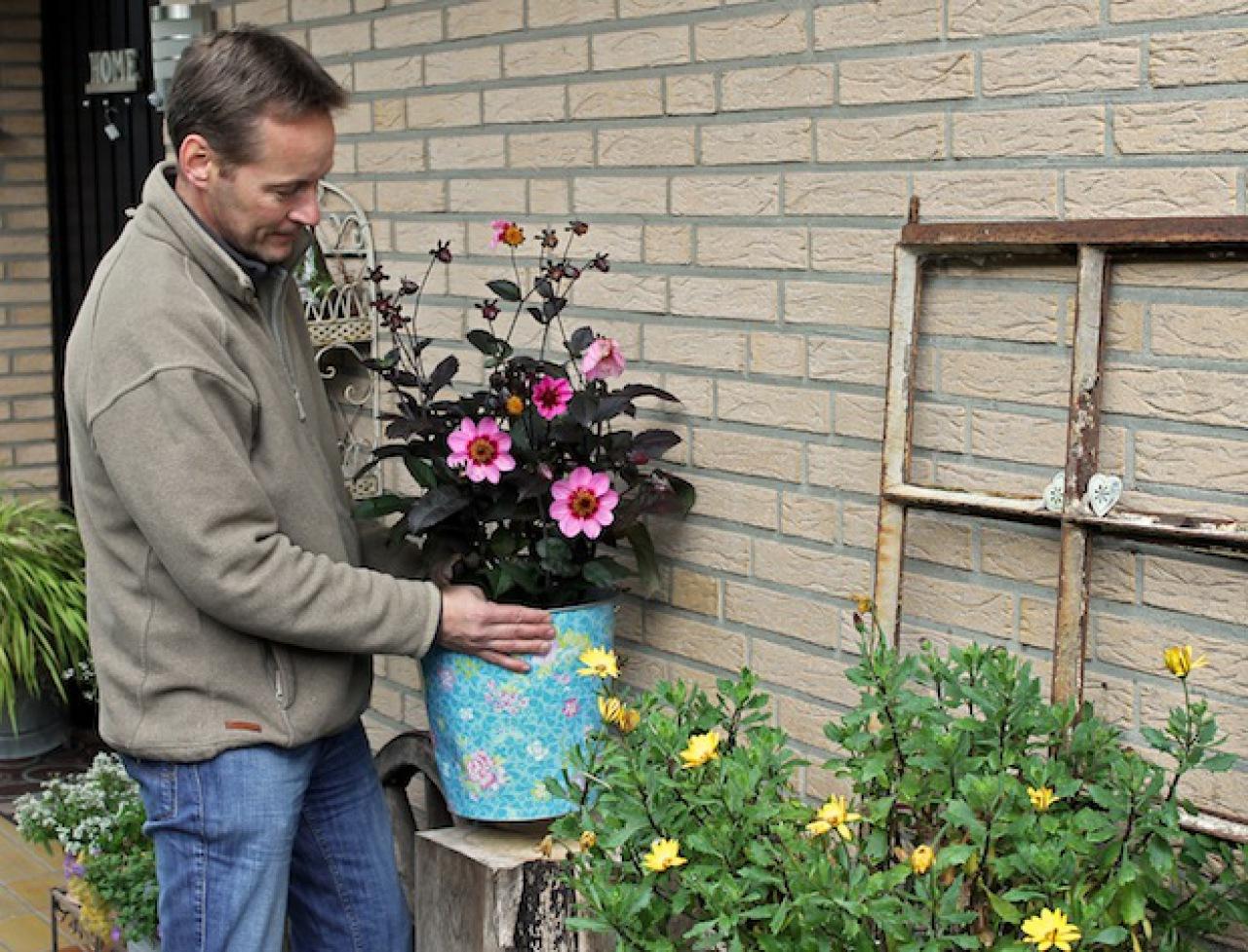Dahlien Im Topf überwintern : dahlien im topf berwintern nachrichten landleben wochenblatt f r landwirtschaft landleben ~ Orissabook.com Haus und Dekorationen