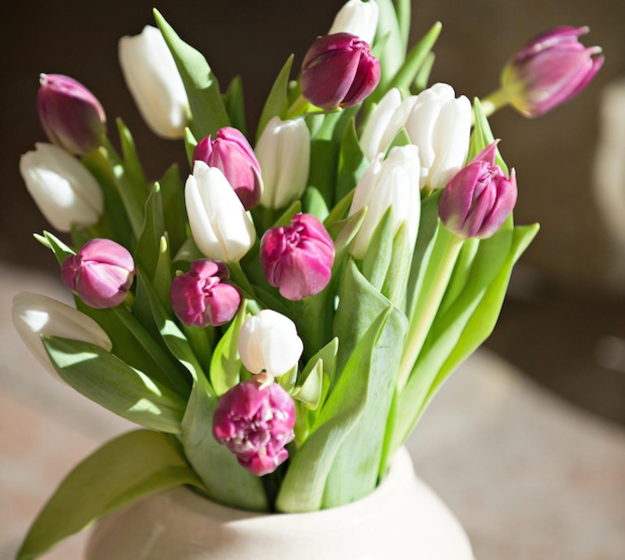 damit die tulpen lange halten nachrichten landleben wochenblatt f r landwirtschaft landleben. Black Bedroom Furniture Sets. Home Design Ideas