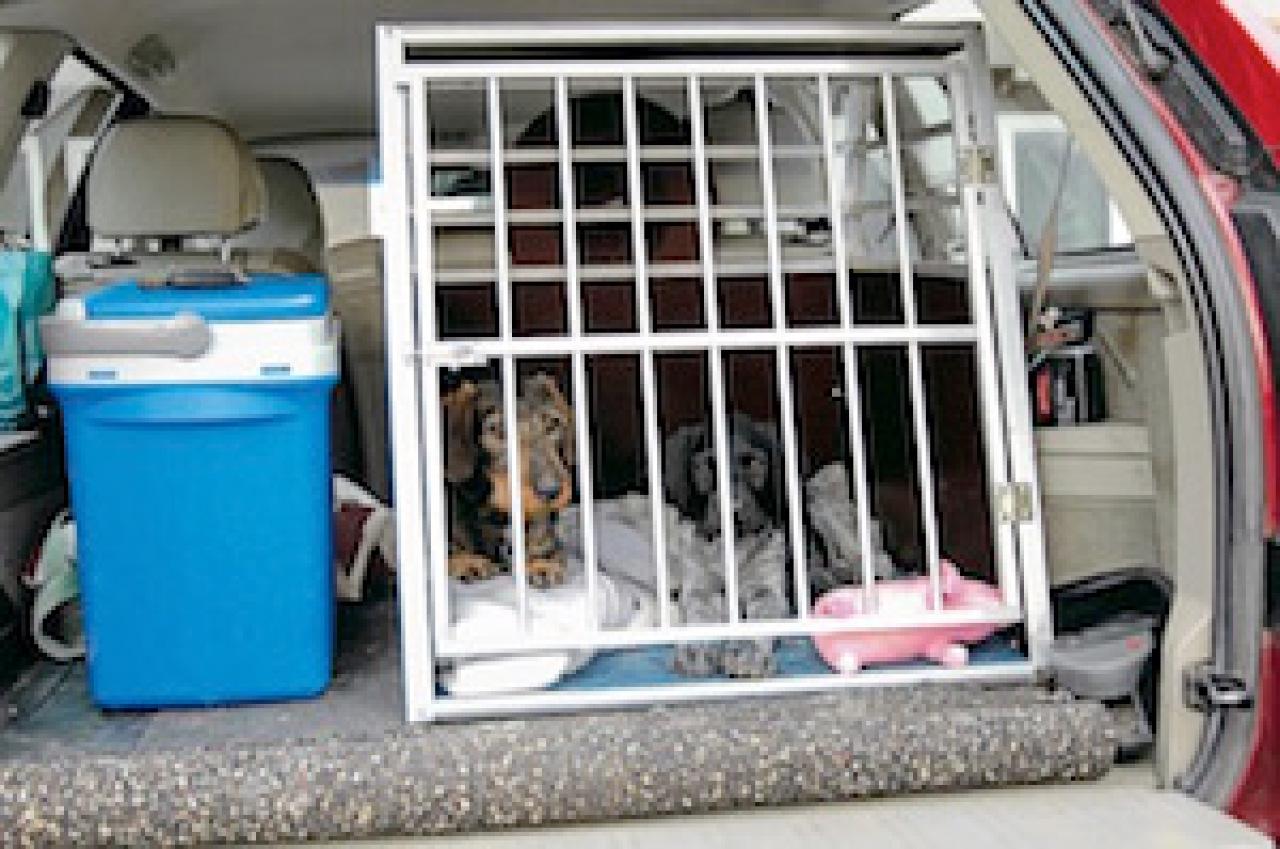 hund im auto transportieren tiere frage und antwort. Black Bedroom Furniture Sets. Home Design Ideas