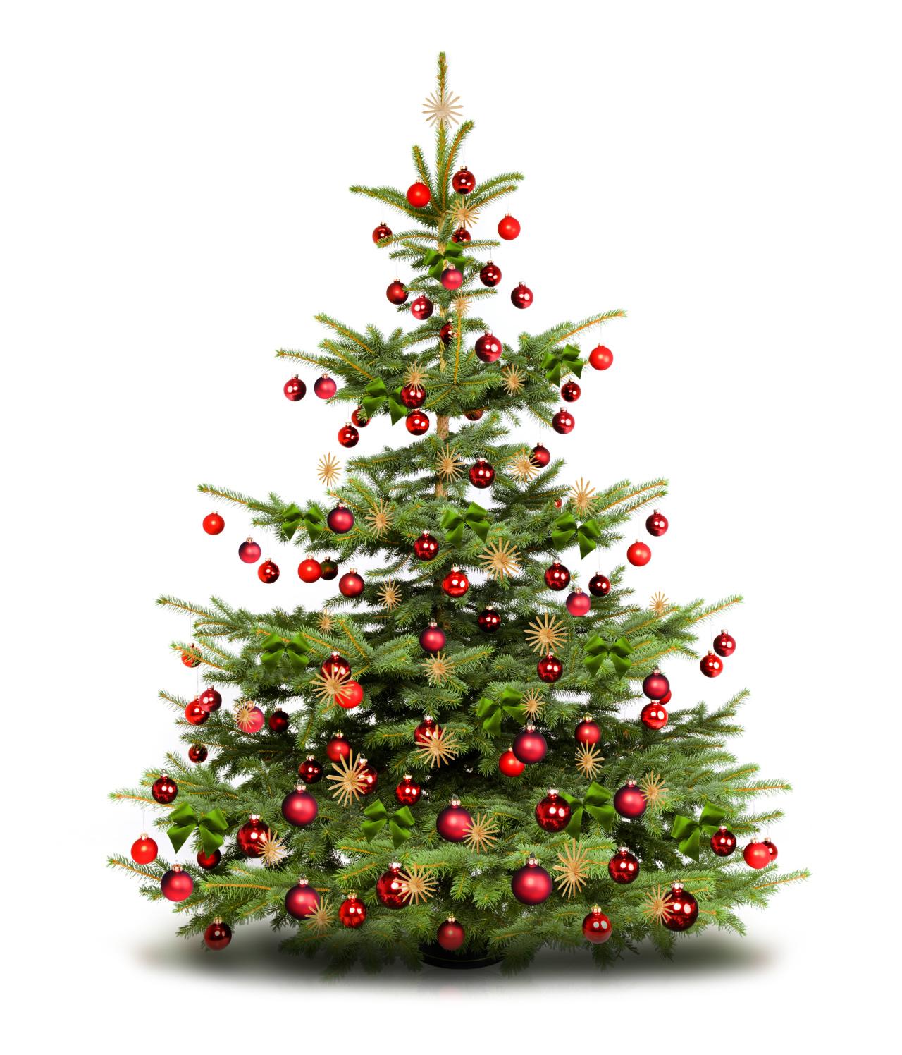 Weihnachtsbaum Ins Wasser Stellen