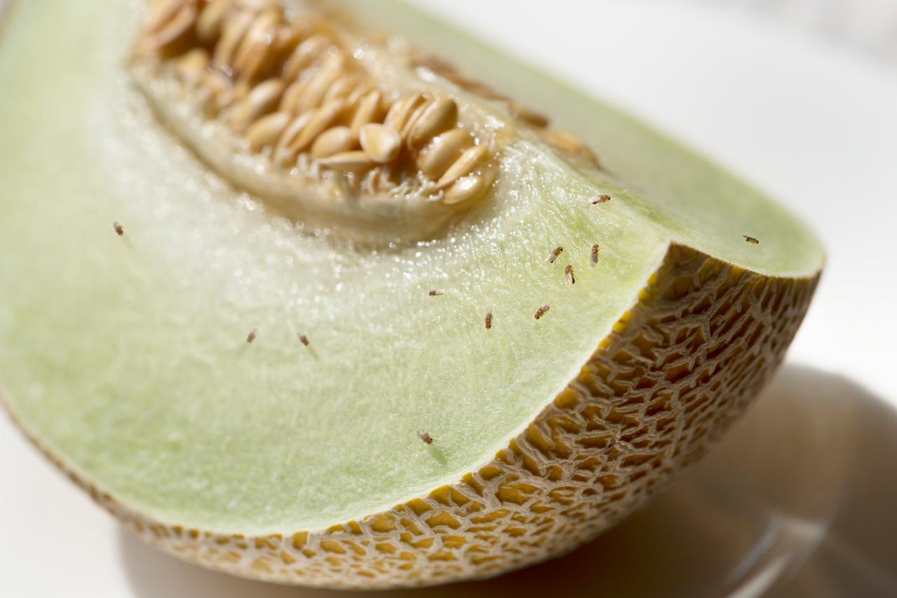 Was tun gegen fruchtfliegen haus haushalt landleben wochenblatt f r landwirtschaft - Was tun gegen fruchtfliegen im zimmer ...