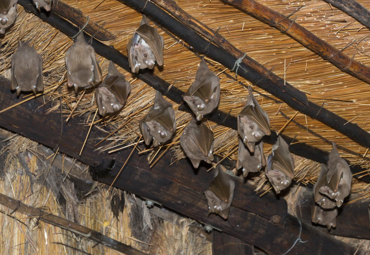 fledermäuse auf dem dachboden - tiere - frage-und-antwort