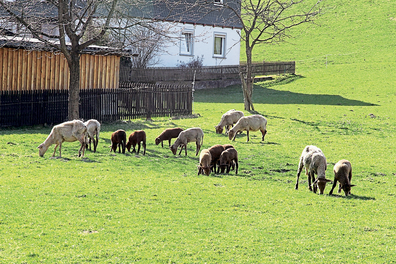 Schafe Halten Im Garten Of Tiere Halten Ohne Ausbildung Tiere Frage Und Antwort